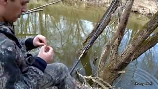 Все таки лучший живец на реке - это пескарь! Тычки/ловля живца/рыбалка на куриную печень. 14 апреля
