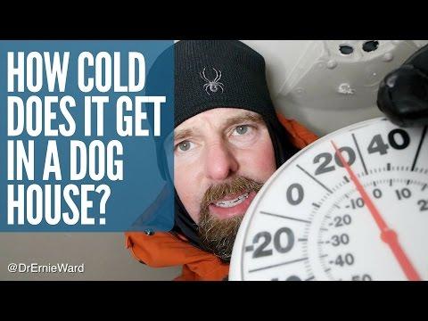 Chien laissé dehors dans le froid