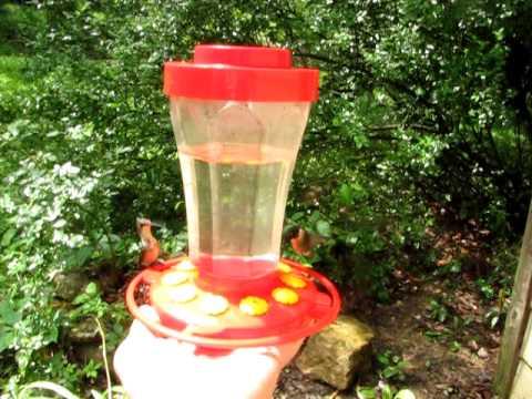Ruby Throated Hummingbirds-Hand Fed-Hillsboro, Missouri-8/2011