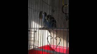 Заболел попугайчик