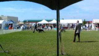 Elevyn Kenny Kennel And Obedience Club: Winners Bitch Afghan Hounds