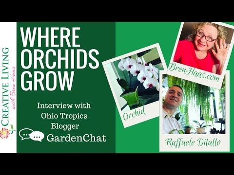 Where Orchids Grow | Interview with Ohio Tropics