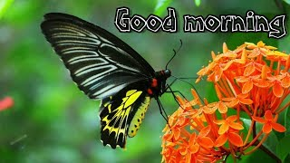 Good morning status video | good morning video | beautiful flowers and Butterflies video | WhatsApp