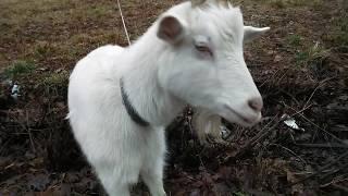 Поездка на дачу.Закрытие сезона.Обзор зимней дачи. День животных. Напугала корова.