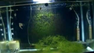 Double Aquarium Stand