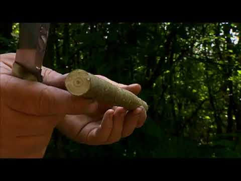 Ray Mears - Cutting with a Knife, Bushcraft Survival