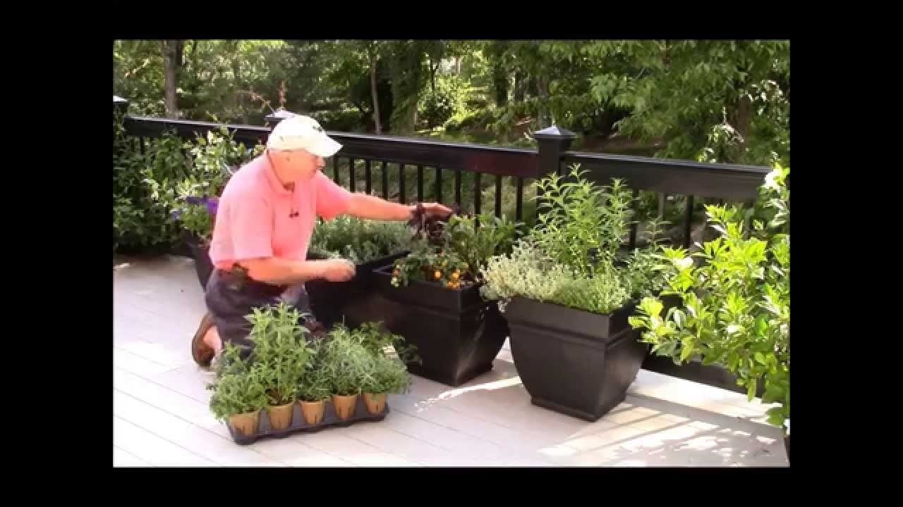 Best Way to Create Container binations Using Herbs & Edibles Footprints Plants