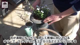 園芸家の杉井志織さんが、ワックスフラワーと宿根ネメシアで一木一草の...