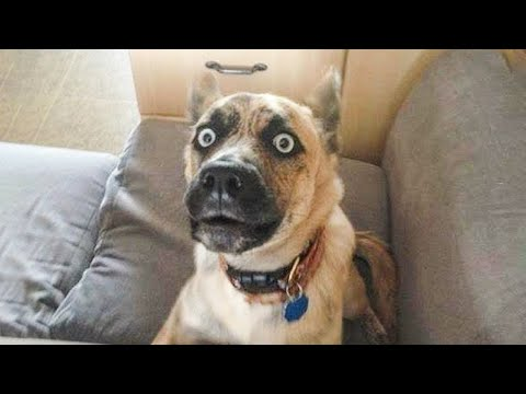 Best Funny Cats 😹 And Dogs 🐶 Reaction 21/4/2021- Try Not To Laugh 🤣