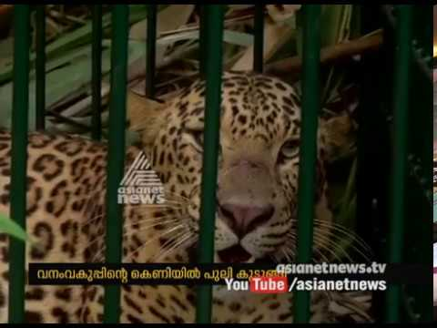 Leopard Catch By Forest Department At Pathanapuram | FIR 9 Jan 2017