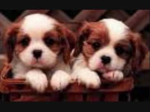 super cute puppies