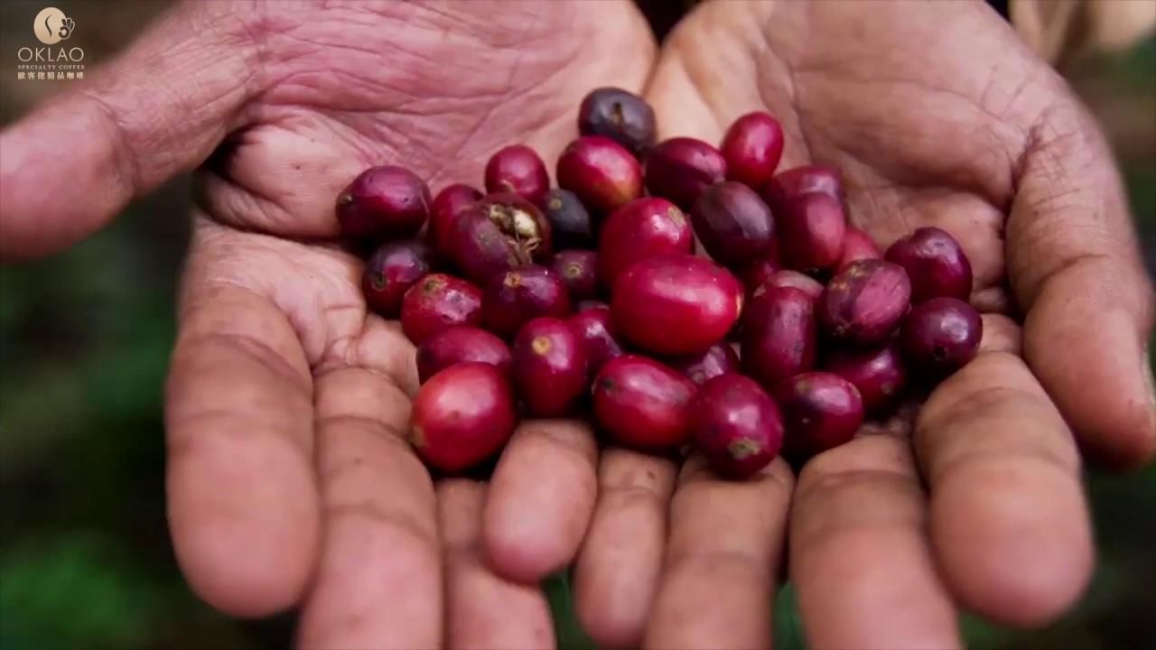歐客佬精品咖啡 ─ THE WORLD MOST FAMOUS GEISHA COFFEE (English)藝伎尋根 - YouTube