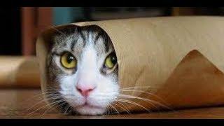 Meow - Ringtone