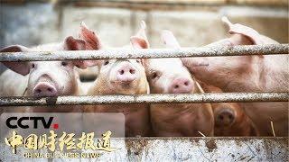[中国财经报道] 两部委:实施生猪规模化养殖场建设补助项目 | CCTV财经