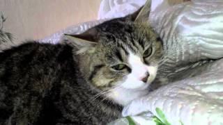 у кошки Марыси светятся глаза