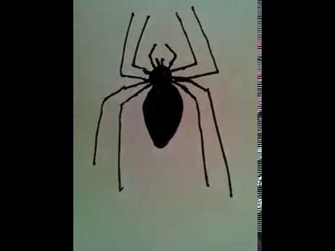 Tuto Halloween Comment Dessiner Une Araignée Réaliste Facile
