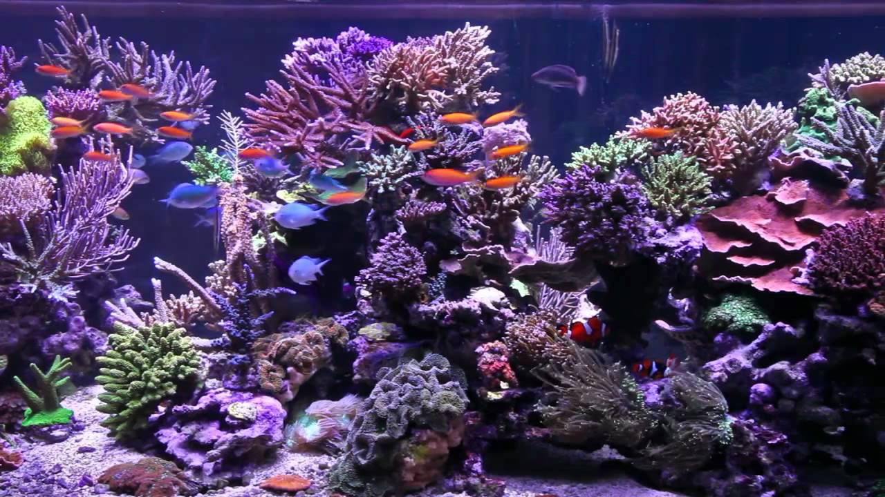 Peter S Fish Tank Episode 1 1350 Gallon Tank Overview