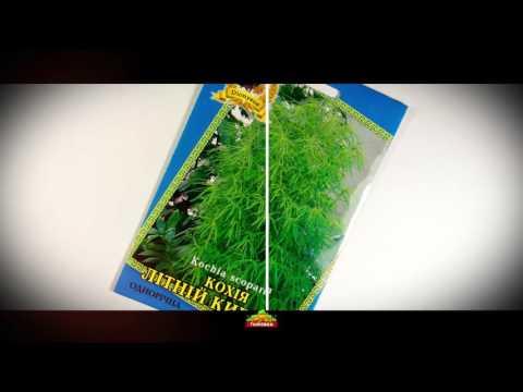 Пассифлора сорта и условия выращивания