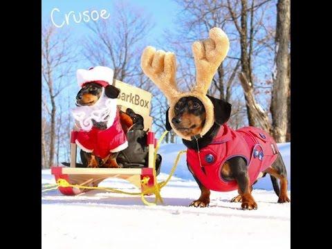 The 'Wiendeer' Sleigh - Santa Crusoe on Christmas Eve