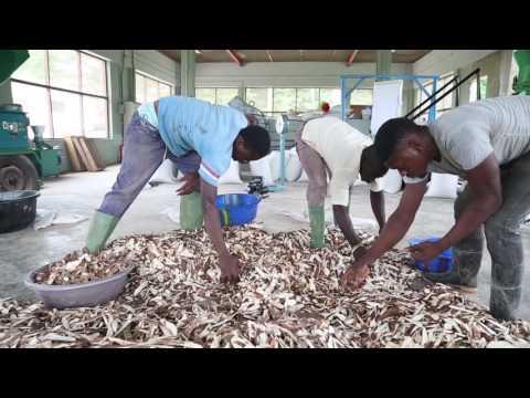 Cassava Peels Processing