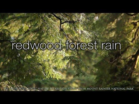 REDWOOD FOREST RAIN 2 HR Screensaver | Nature Relaxation™ HD Scene from Mount Rainier
