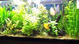 Basics Of Maintaining A Fresh Water Planted Aquarium