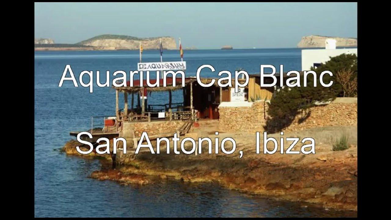 Aquarium Cap Blanc San Antonio Ibiza Youtube