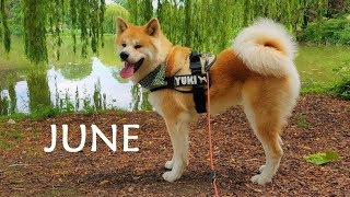 This is the sixth Video of the Month (06/12). Have a nice June! Aki...