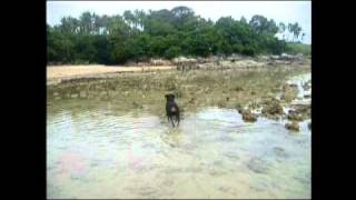 Fishing Rottweiler On Rawai Beach Phuket Thailand.avi