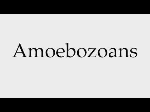 How to Pronounce Amoebozoans
