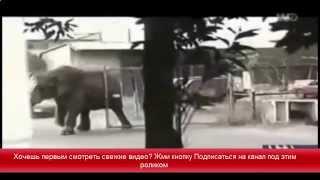 Животные нападают на  людей смотреть хищников