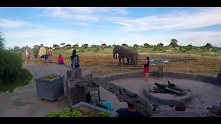 Camping with Wild Elephants in Botswana | Indian Girl Camping In The Forest | Neel Travelogues