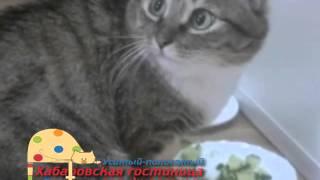 """Хабаровская гостиница для животных """"Усатый-полосатый"""""""