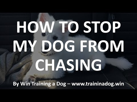 How to stop my dog from chasing