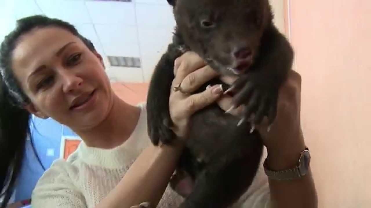 Погрузка и доставка груза Москва-Владивосток (Фура) - YouTube