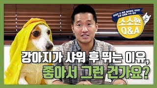 [Engsub | 강형욱의 소소한 Q&A] 강아지가 샤워 후 뛰는 이유, 좋아서 그런 건가요?