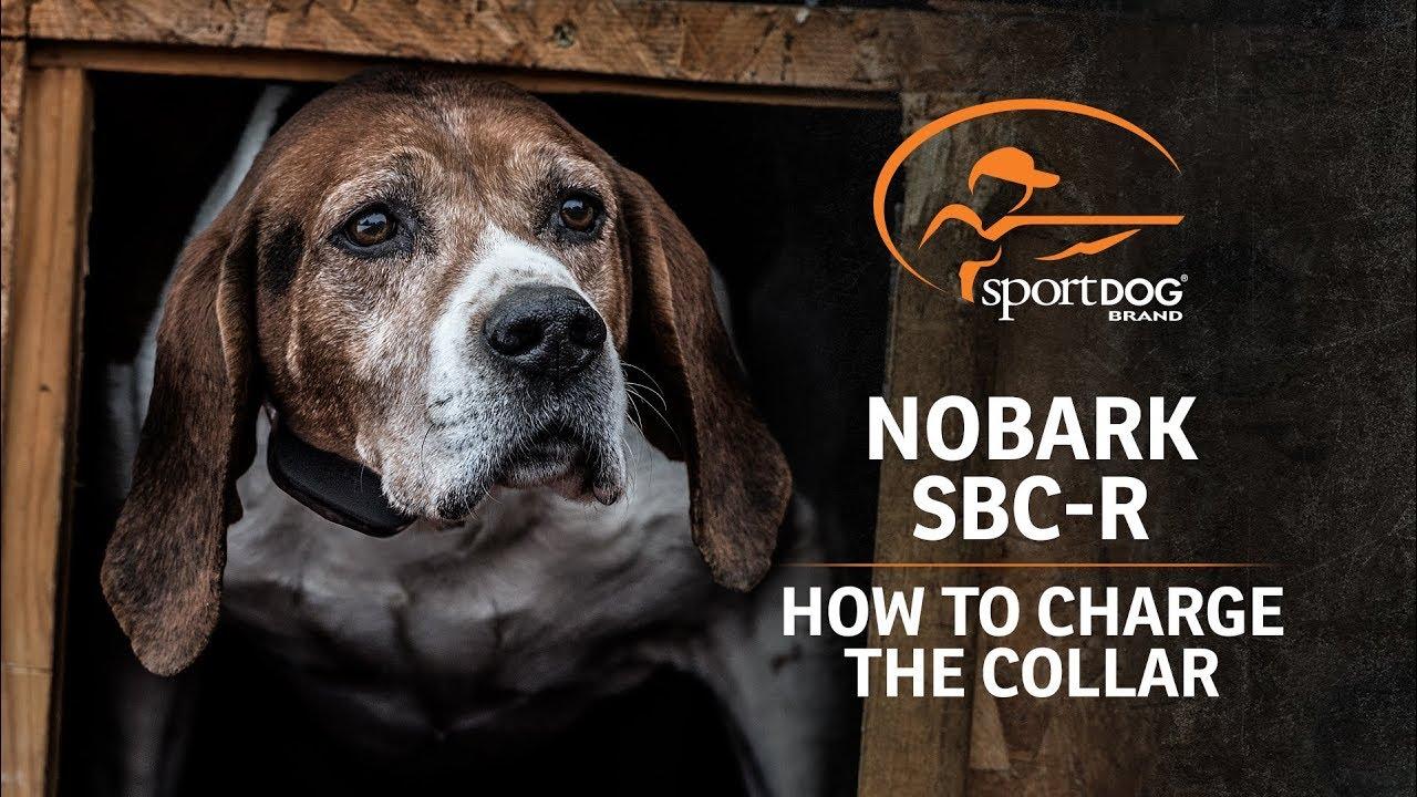 SportDOG BrandR NoBark SBC R How To Charge The Collar
