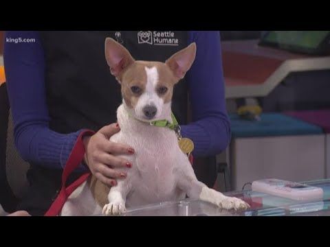 Pet Microchips: How Do They Work?