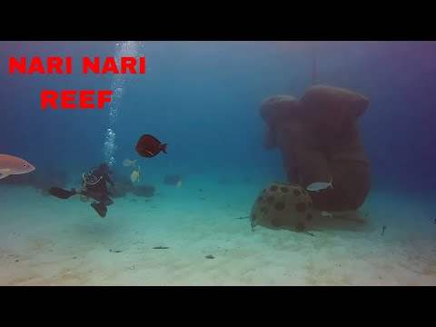 SCUBA DIVING THE NARI NARI REEF AT NASSAU BAHAMAS WITH JOSE GONZALEZ ( OCTOBER 2017 )