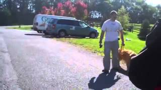 Maryland Dog Training   Heeling And Placing During Trainers Workshop