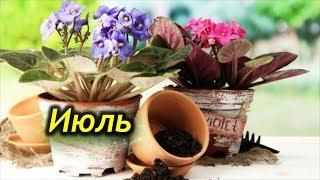 ИЮЛЬ. Сезонные работы с комнатными растениями.  Скучать в этом месяце не придется.