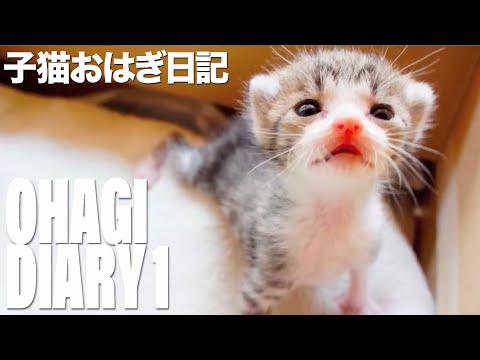 子猫おはぎ日記