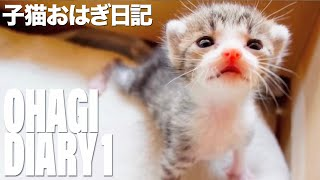 思わず飼いたくなる!? 子猫おはぎの成長を見守る動画