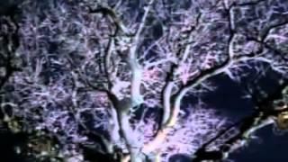 Выхода нет (1998) - Гранатовый альбом.