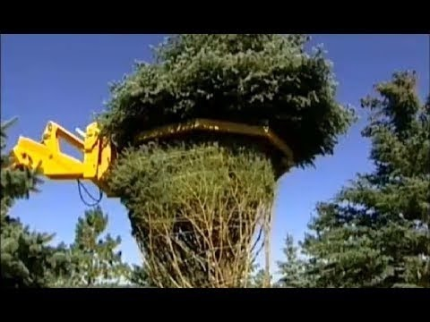 Heavy Machine Pruning Agriculture - INVENTION TECHNOLOGY Move Large Tree