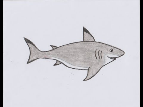 How to draw shark for kids youtube for How to shark fish