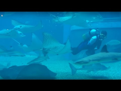 Osaka Aquarium walkthrough - Whale Shark, Rays, Sun Fish, Squids, Penguins... etc etc!
