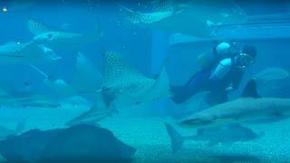 osaka aquarium walkthrough whale shark rays sun fish squids penguins etc etc