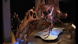Sehenswert! // Spinosaurus im Naturkundemuseum (Teil 1)