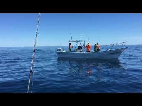 Fishing Baja California, Mexico For Yellows And Tuna